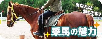 乗馬の魅力『3H』